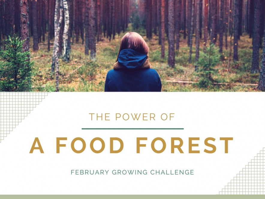 Food Forest Challenge