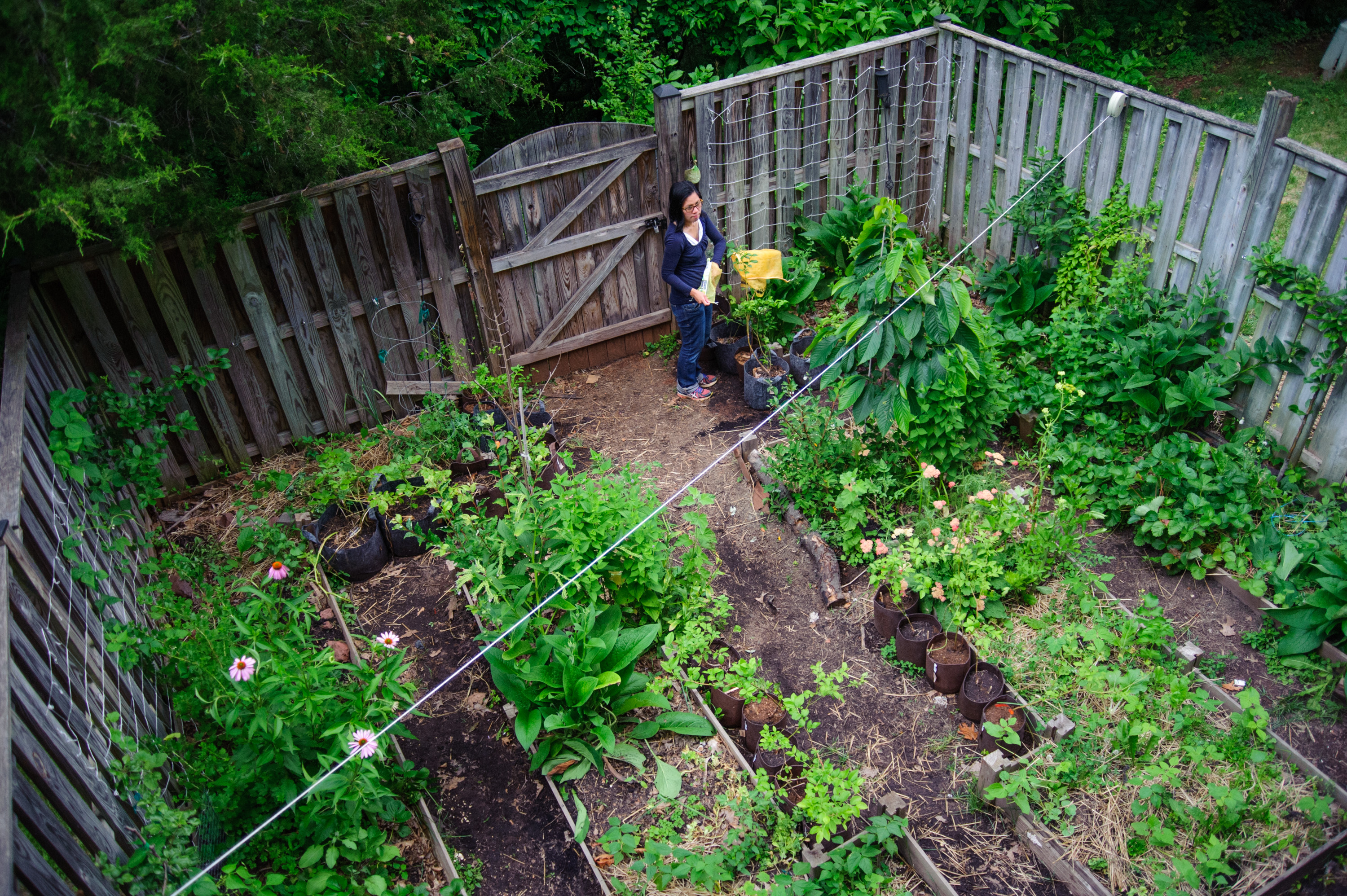 why grow your own food discussion permaculture gardens